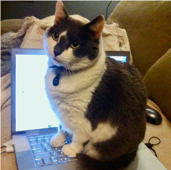 A cat sitting on the keyboard of a computer  Description automatically generated